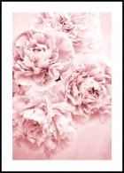 Pink Flowers Dream Poster